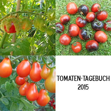 Collage-Tomaten-2015